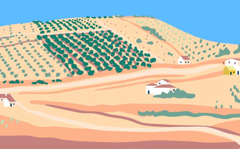 banner-landscape-olives