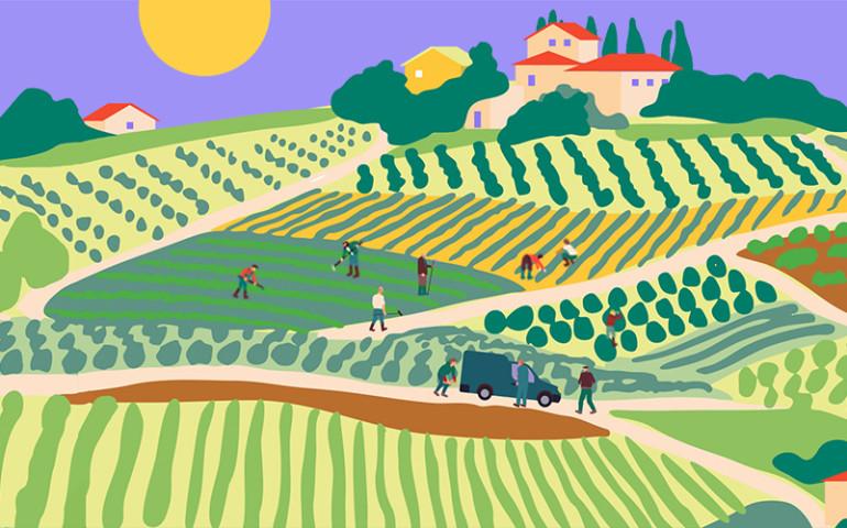 banner-landscape-vines