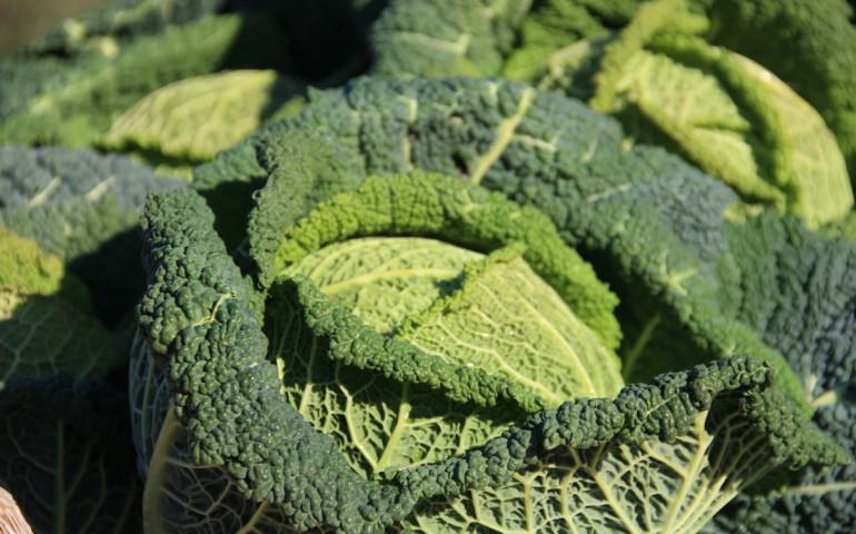 mercato-contadino-svo-10-sempione-news
